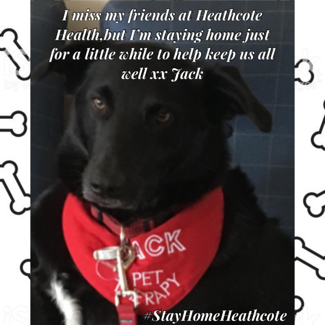 StayHomeHeathcote-Jack-Pet-Therapy-2