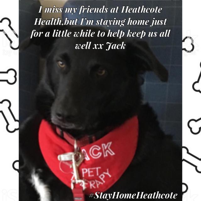 StayHomeHeathcote-Jack-Pet-Therapy-2